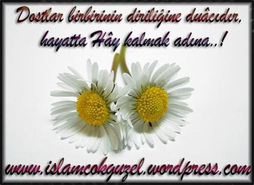 dostlar_islamcokguzel